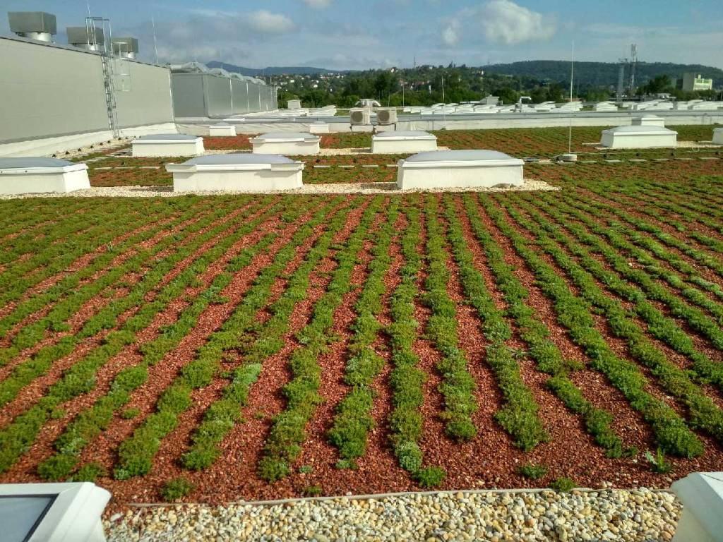 Zöldtetőépítés - Budapest Ipari Csarnok