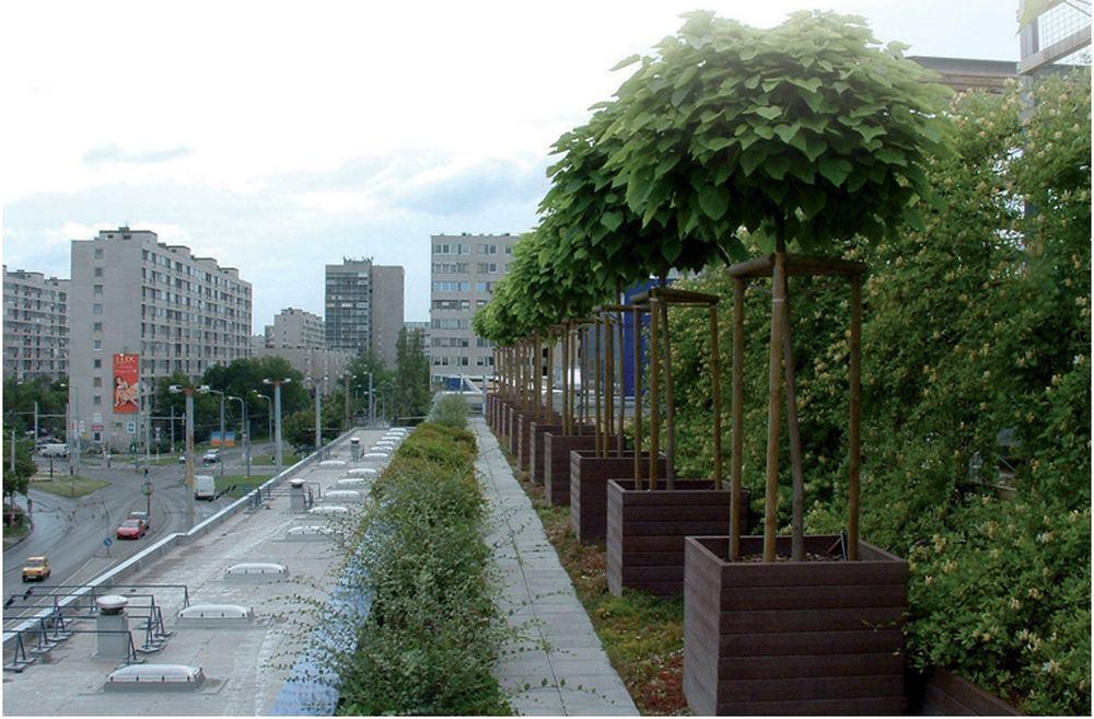 Ökológia – zöldtetőépítés