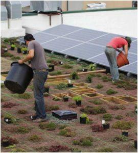 Zöldtetőn jobb a napelemek hatásfoka