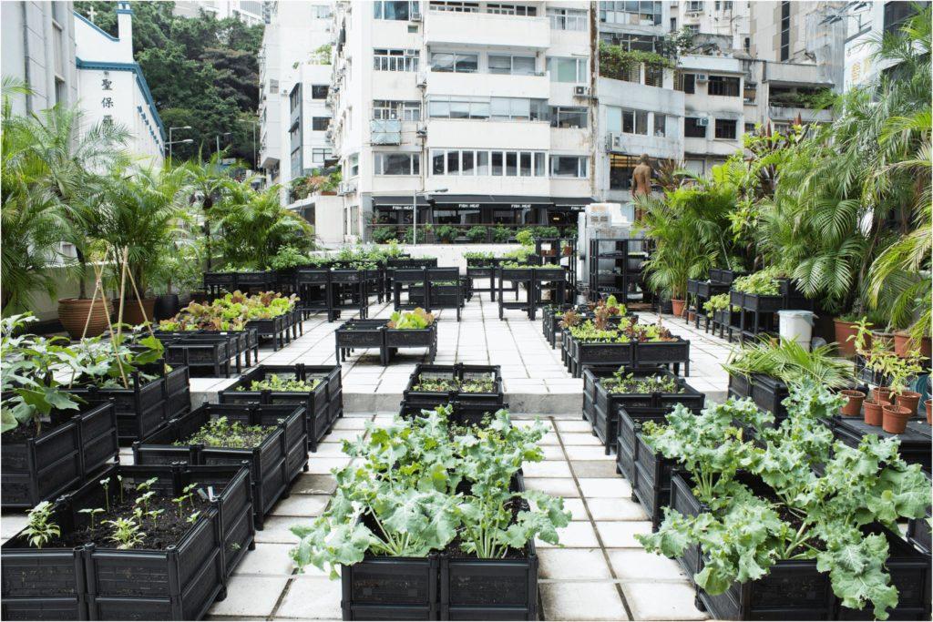 A tetőkert lehet a biogazdálkodás helyszíne is. Tetőkert kialakítás alternatívái.