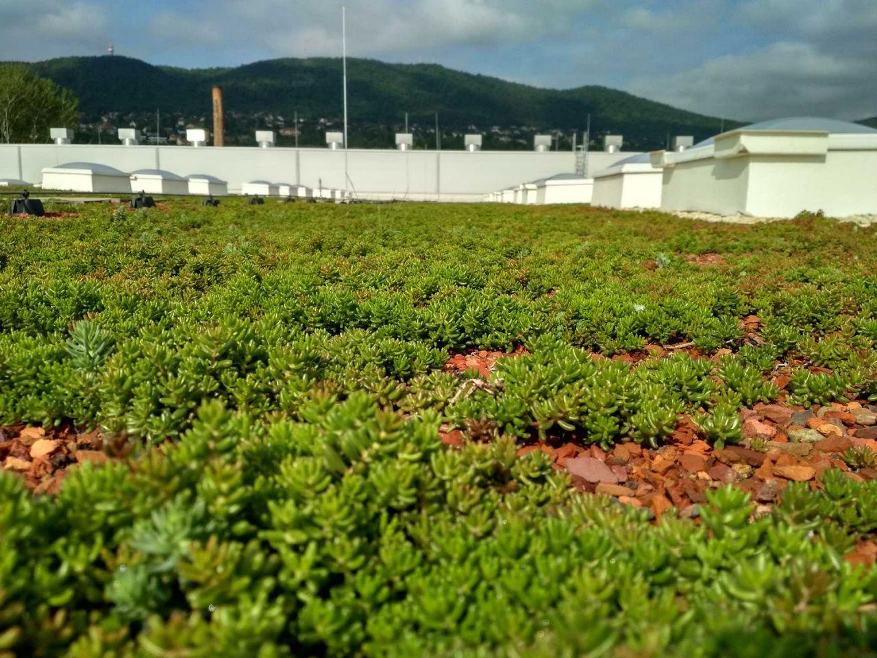 Zöldtetőépítés - Takarítson meg százezreket