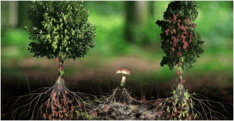 A fák kommunikációja