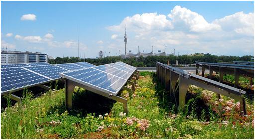 Napelemes – bioszolár zöldtetőn